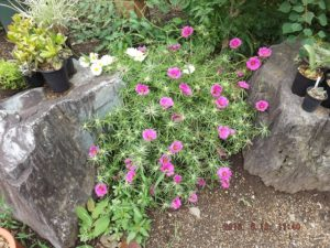 地植えの花